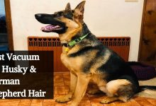 Best Vacuum for Husky & German Shepherd Hair