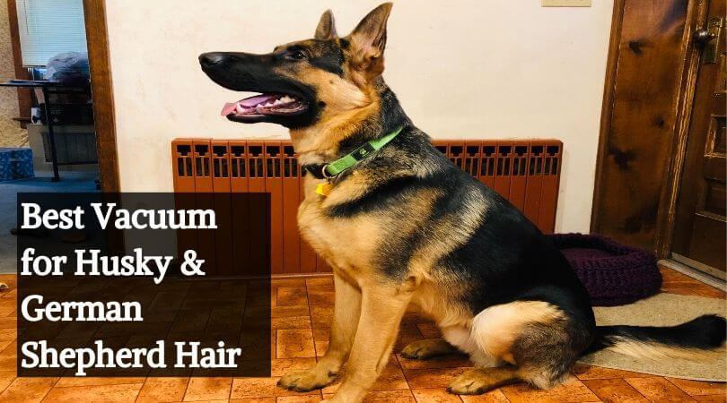 Best Vacuum for Husky & German Shepherd Hair