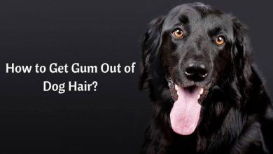 How to Get Gum Out of Dog Hair_