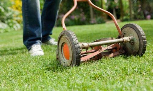 Mowing St Augustine Grass